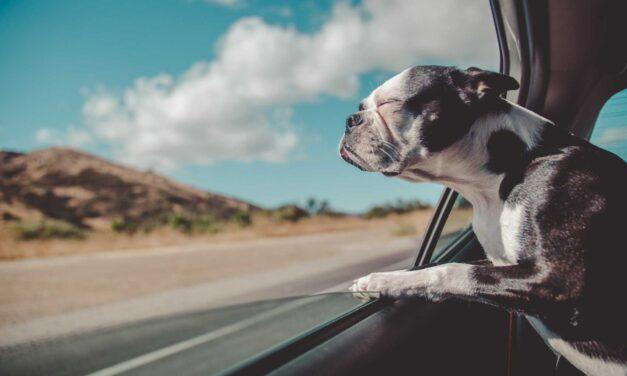Como levar meu pet para Portugal?